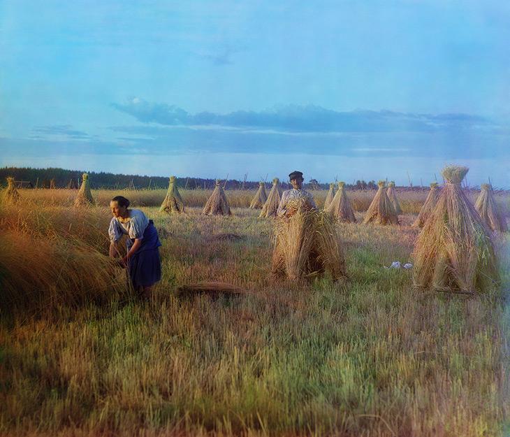 На жнитве / At the stubble-field by Sergey Prokudin Gorsky - 1909
